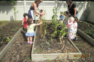 Growing Plants Outdoor Classroom Westchester Early Childhood Program